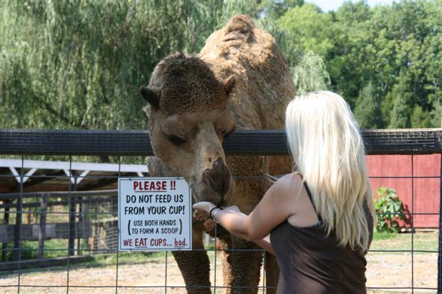 Deer Farm Petting Zoo