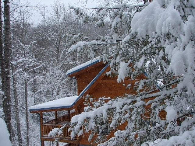 Mountain Laurel covered with Snow at Elk Springs Resort