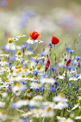 Gatlinburg Wildflower Pilgrimage