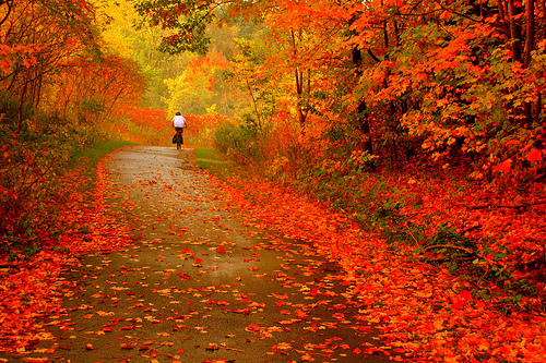 Gatlinburg Fall Colors