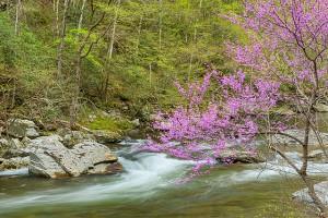 little_river_trail