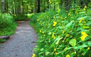 oconaluftee-trail
