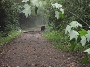 schoolhouse-trail