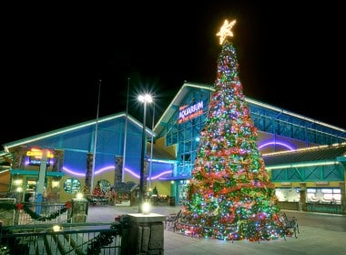 Ripleys Aquarium at Christmas Time