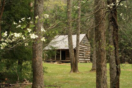 Carter Shields Cabin with spring Dogwood Blooms.Great Smoky Mountains National Park