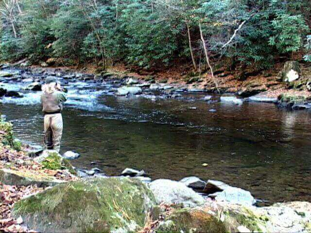 Gatlinburg trout fly fishing guide elk springs resort for Fishing in gatlinburg tn