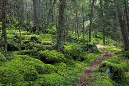 gatlinburg-hiking-baxter-creek-trail