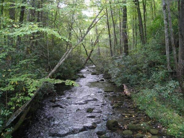 gatlinburg-hiking-boogerman-loop-trail2