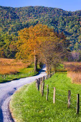 Late afternoon on a winding country road in Cade's Cove, Great Smoky Mountains National Park