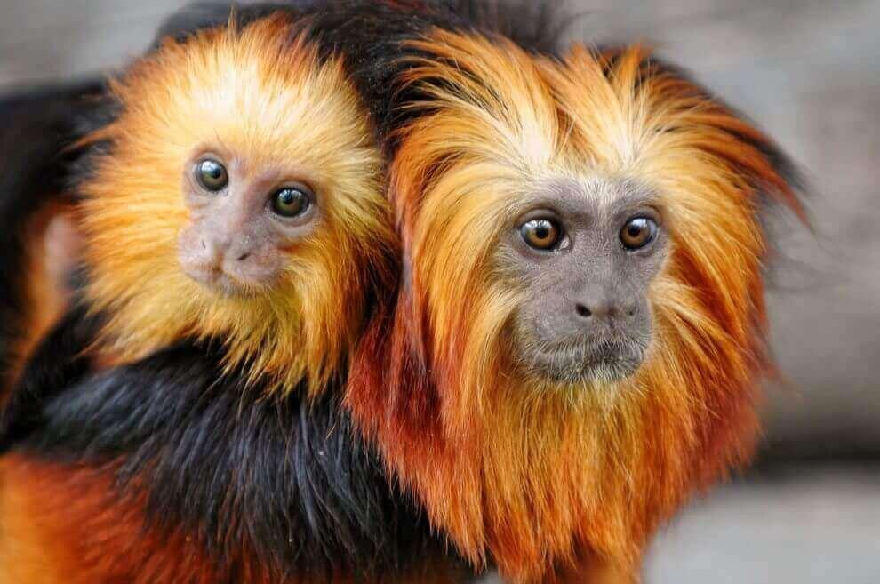 rf-zoo-monkeys
